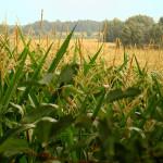 por-que-invertir-en-el-sector-agropecuario-de-bolivia