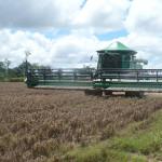 produccion-agricola-en-santa-cruz