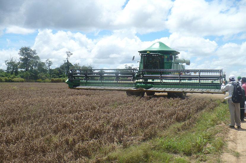 Producción agrícola en Santa Cruz
