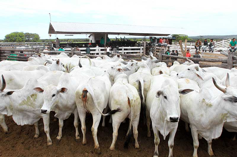 Bolivia negocia acuerdo para exportar carne a Rusia