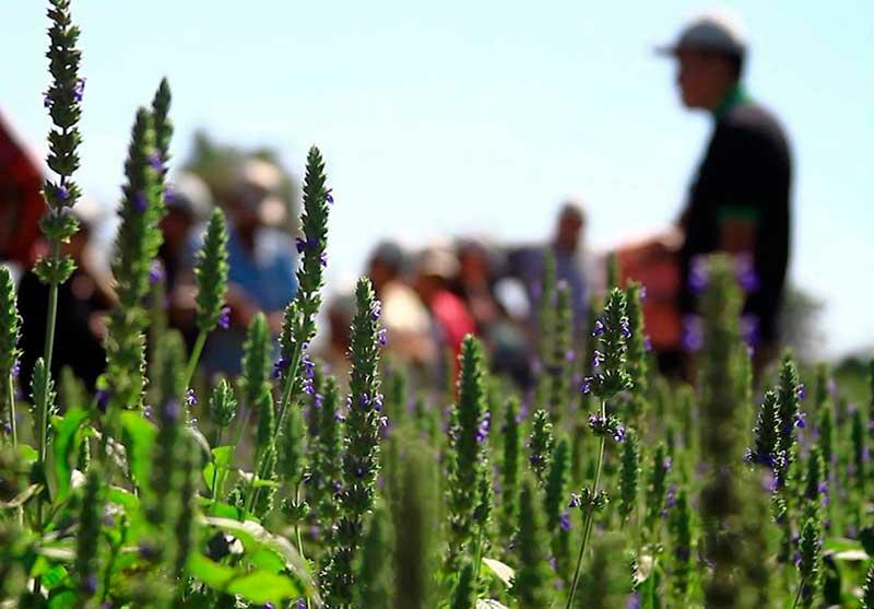 Venta de campos en Santa Cruz de la Sierra