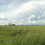 campos-en-santa-cruz