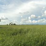 5-oportunidades-para-invertir-en-campos-de-bolivia