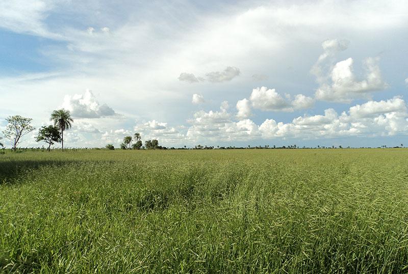 5 oportunidades para invertir en campos de Bolivia