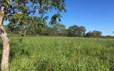 Campos Cañón Verde