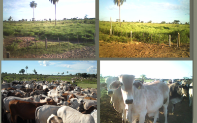Campo Restrinca – Paraguay
